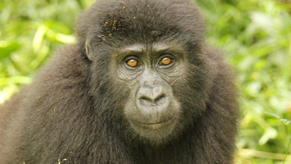 Packing for Gorilla tracking in Uganda and Rwanda